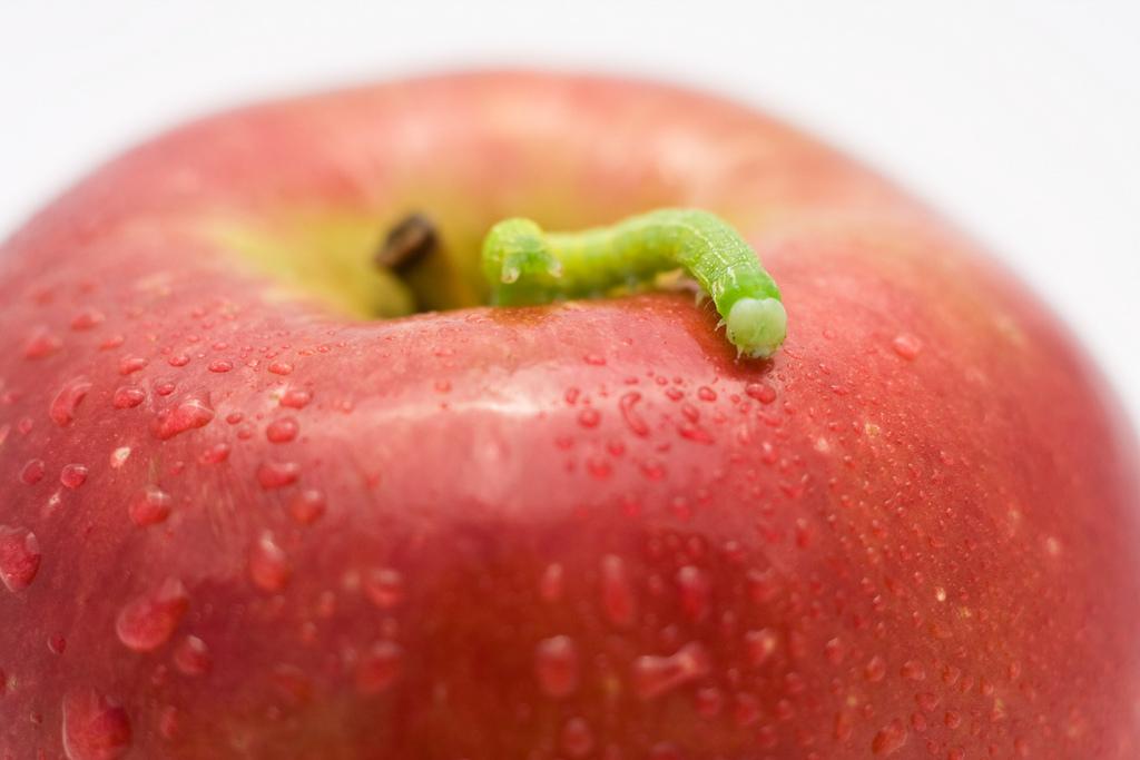 apple_worm