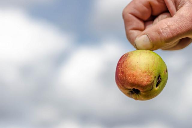 apple_podrida