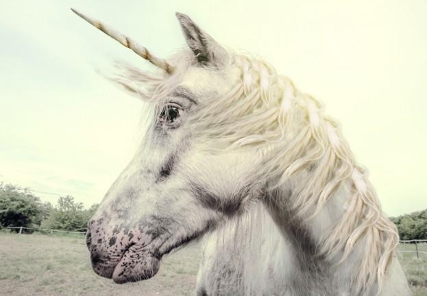 unicorn_bug1
